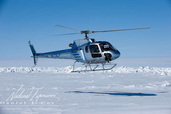 Pilot Bob Dunbar maneuvers his chopper over the ice of the Beaufort Sea while darting polar bears for Dr. Steven Amstrup. Alaska.