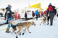 Mats Pettersson har hjälp med sina hunder vid den ceremoniella starten av 2017 Iditarod, Anchorage, Alaska, USA