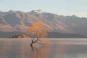 """All that is gold does not glitter, not all those who wander are lost; the old that is strong does not wither, deep roots are not reached by the frost."" ~ J.R.R. Tolkien<br />