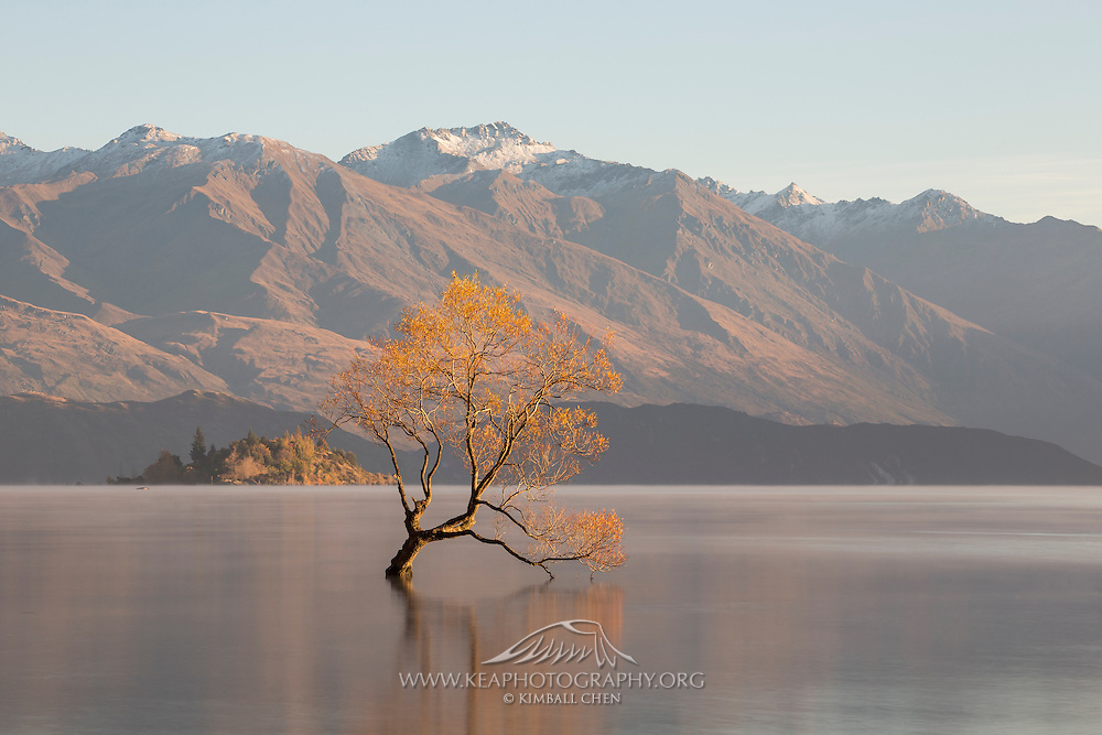 &quot;All that is gold does not glitter, not all those who wander are lost; the old that is strong does not wither, deep roots are not reached by the frost.&quot; ~ J.R.R. Tolkien<br />