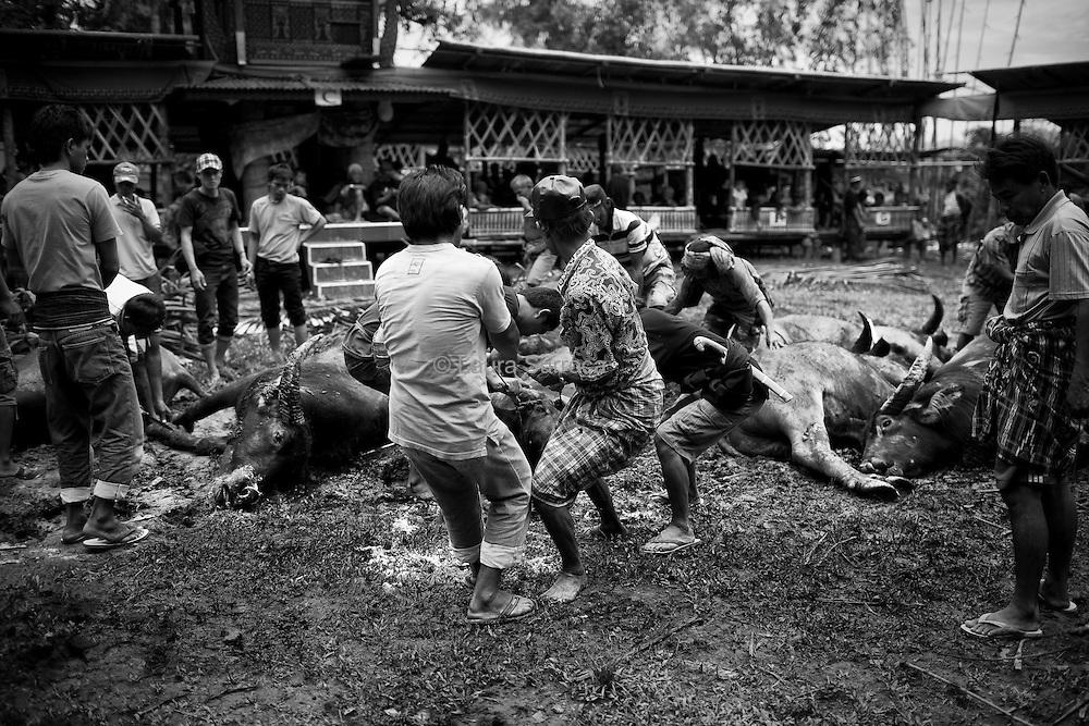 Tagari, 16 mars 2012. Après le moment solennel du sacrifices des buffles, tout le village se mobilise. Avec une grande vitesse et beaucoup de dextérité, ils préparent la viande pour sa conservation, en la séchant. Elle servira également à nourrir les invités les jour suivants.