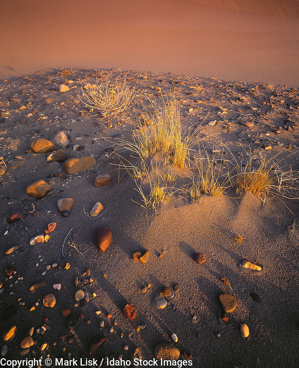 Idaho. Owyhee, Canyonlands,  Desert. Smooth rocks and wind whipped grass at Bruneau Dunes State Park, Idaho.