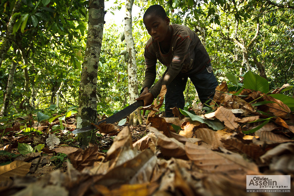 Koffi Yao Franck, 12, uses a machete to clear dry leaves under cocoa trees on his family's cocoa plantation near the village of Soumaorodougou, Bas-Sassandra region, Cote d'Ivoire on Saturday March 3, 2012. He goes to school but helps with farming chores on weekends.