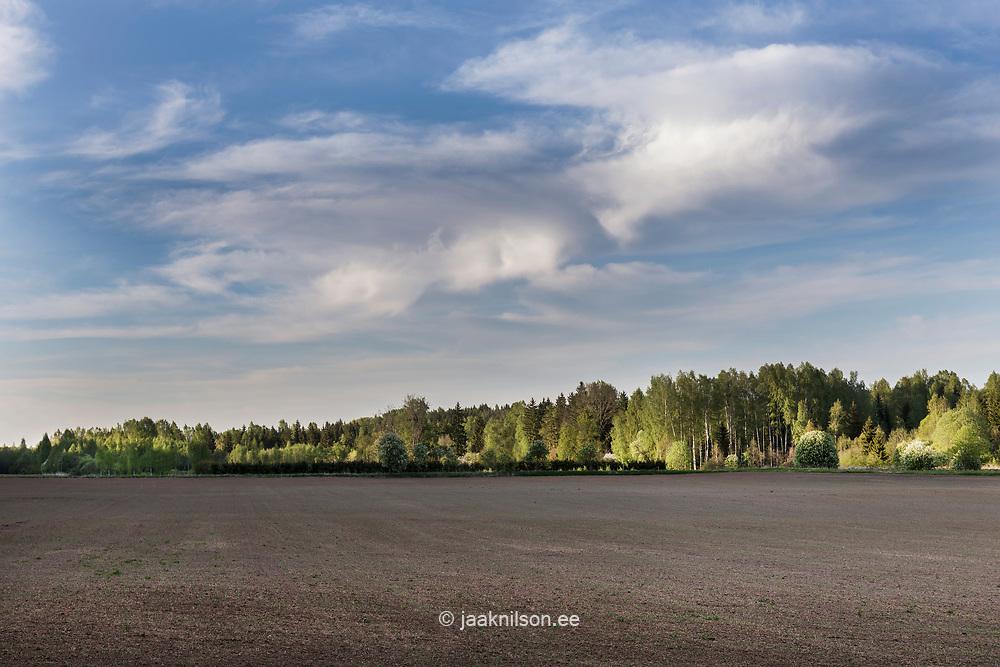 Ariculture, field. Rural landscape in Estonia.
