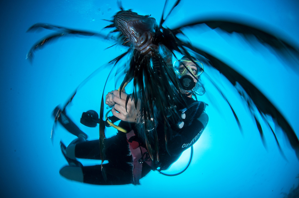 Even divers who do not like to spear are joining the fight against the invasive lionfish