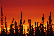 boreal forest at dawn <br /> near Fort Resolution<br /> Northwest Territories<br /> Canada
