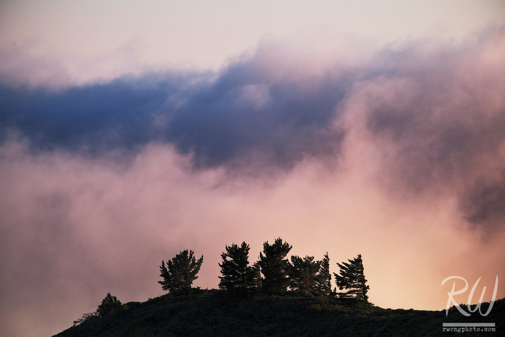 Trees and Fog at Sunset, Mount Tamalpais State Park, California