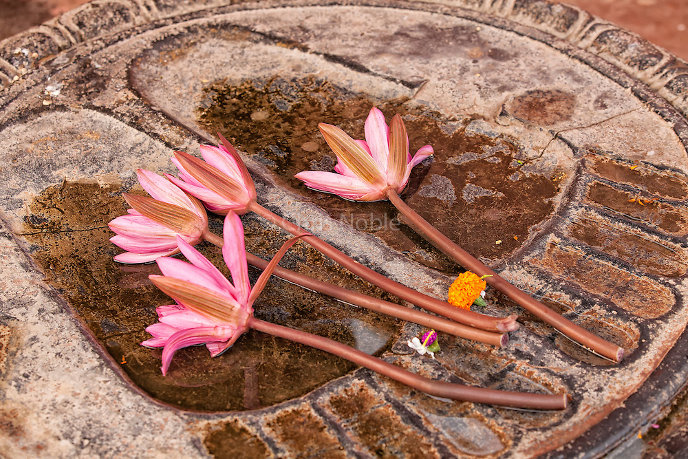 Lotus blossoms placed on a carved relief of the Buddha's footprints at the Mahabodhi Temple in Bodhgaya India