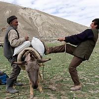 Herders loading donkey. Big Pamir, Afghanistan.