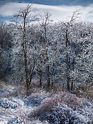 Cold Spring roadside. Twinkle trees.