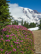 Mt. Rainier Skyline Trail offers stunning displays of subalpine wildflowers, a close-up look at Mount Rainier and the Nisqually Glacier, and, on a clear day, views of peaks as far south as Oregon's Mount Hood.