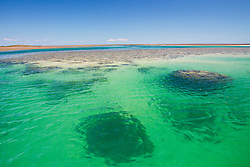 Bombies underwater at Montgomery Reef on the Kimberley coast.