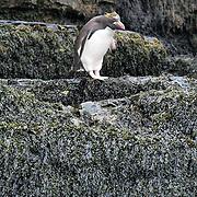 Ballade dans la station baleinère de Leith, dernère en activité