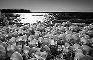 Warner Park Beach in Madison,  Wisconsin Wednesday, Dec. 6, 2017.