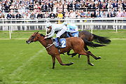 CHAPELLI (2) ridden by jockey James Doyle and trained by Mark Johnston winning The Jigsaw Sports Branding British EBF Novice Stakes over 5f in a photo finish (£15,000)during the Mid Summer Raceday at York Racecourse, York, United Kingdom on 15 June 2018. Picture by Mick Atkins.