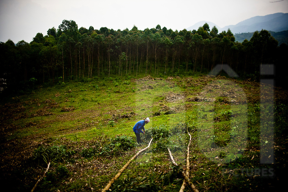 Lone silhouette of a woman standing in a deforested area, Yen Bai Province, Vietnam, Southeast Asia