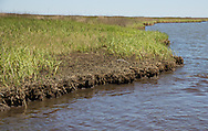 April 9, 2014 , Weathered oil coats the surface on the marsh in Bay Jimmy, one of the areas hardest hit by the BP oil spill. <br /> <br /> Nearly four years after the  Macondo well blew out on April 20, 2010, the Gulf Coast continues to be impacted by the BP spill.