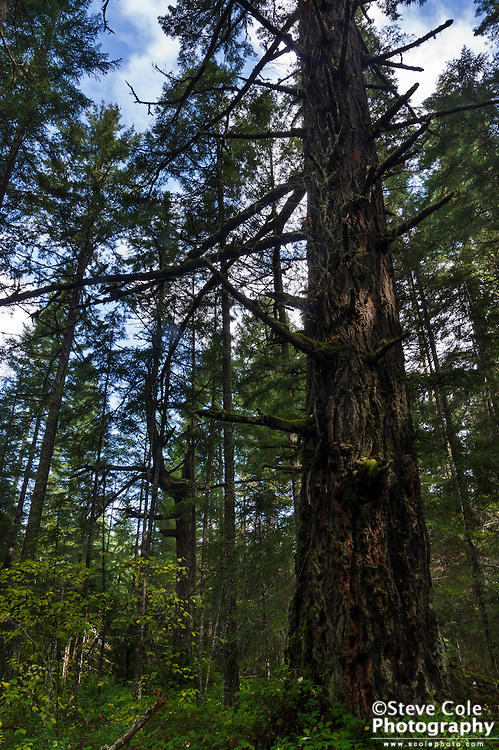 Ragu Timber Sale Unit I #2 - Middle Fork Coquille River
