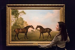 "© Licensed to London News Pictures. 01/12/2017. London, UK.  A technician presents ""Two bay hunters in a paddock"", 1789, by George Stubbs, (Est. GBP1.5-2.0m).  Preview of ""Masters of Light"", Sotheby's Old Masters Evening Sale which will take place on 6 December at Sotheby's, New Bond Street. Photo credit: Stephen Chung/LNP"
