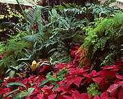 Garden, Red Leaves, red flowers, New Zealand