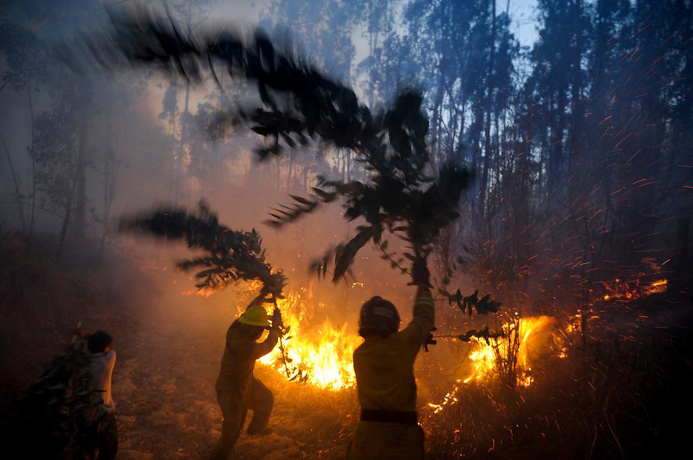 Muchos incendios se dieorn dentro de bosques, fuera del alcance de los carros bomba. Los bomberos tuvieron que armarse de ramas para sofocar las llamas. Durante una sequía de dos meses, aproximadamente 2565 incendios forestales, (muchos presuntamente provocados) quemaron 3796 hectareas de bosques, algunas casas y muchos animales silvestres en las laderas boscosas que rodean Quito, la capital del Ecaudor.   Ningún humano murió, pero tomaran décadas antes de que las áreas afectadas se recuperen.