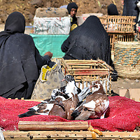 """Pigeons in Baskets and Egyptian Women at Market in Luxor, Egypt<br /> Luxor, Egypt, was once a thriving city for tourists who come to see the ancient temples and tombs of kings. But a series of tragic events, such as a massacre in 1997, the civil demonstrations since 2011 called """"Arab Spring,"""" and a hot air balloon crash in 2013, have kept many of the foreign visitors away. The severe economic impact has caused the locals to find income by growing their own food and raising pigeons, like these for sale at an open market."""