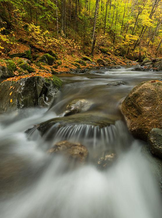 Clark Brook autumn foliage, Green Mtn National Foreset near Granville, Vermont