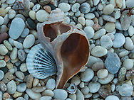 Seashells, Truman's Beach on the Long Island Sound, owned and maintained by the Orient-East Marion Park District, Long Island, New York