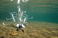 Fishiding Structure (cradle model) after being placed in shallow water.<br /> <br /> ENGBRETSON UNDERWATER PHOTO