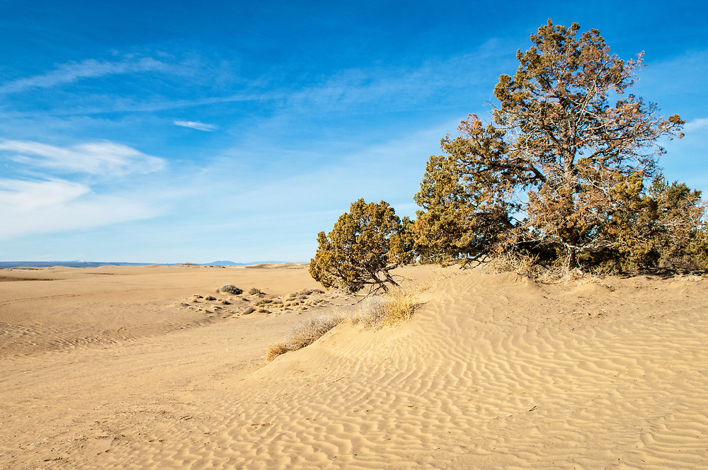 Sand dunes and Western Juniper trees in Christmas Lake Valley, southeast Oregon.