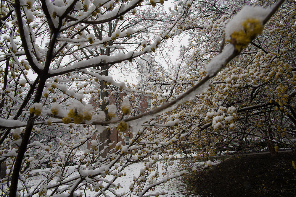 Athens, Campus Beauty, Winter