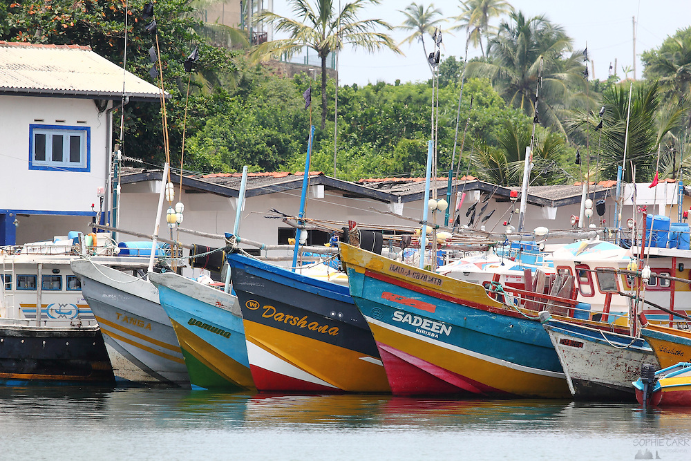 Colourful fishing boats at Mirissa Harbour, along Sri Lanka's southern coast
