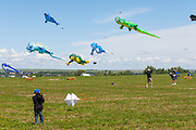 Kites soar high above the crowds. Windscape Kite Festival, Swift Current, Saskatchewan.