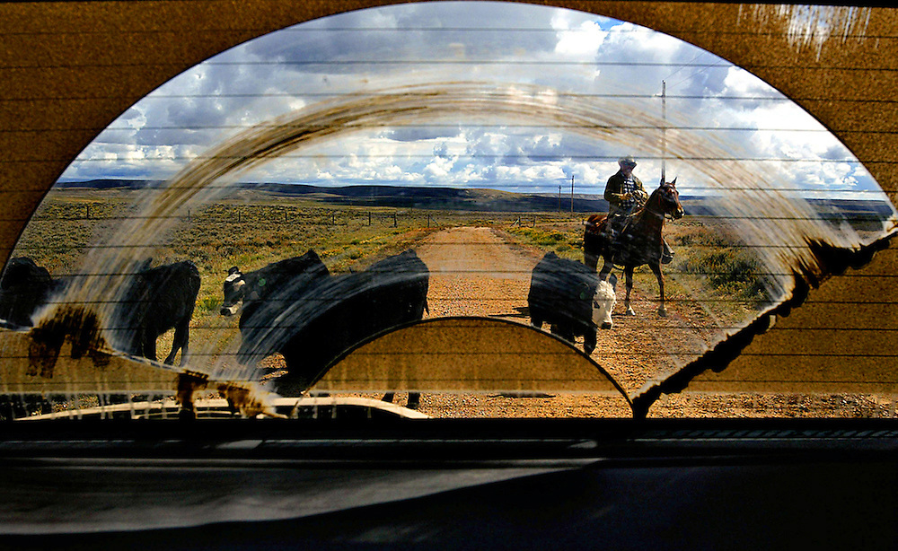 A rancher in Wyoming rounds up the cattle on his ranch in Wyoming as seen through a car window.