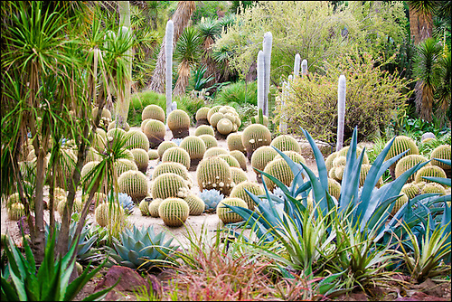 Marvelous A Dry, Colorful Desert Garden Of Succulent Plants.