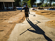 "08 DECEMBER 2015 -  NONG SAENG, NAKHON NAYOK, THAILAND:  A worker at a rice drying business spreads rice to dry in the sun during the rice harvest in Nakhon Nayok province, about two hours north of Bangkok. Thai agricultural officials expect rice prices to go up by as much as 15% as global production of rice is cut by the Pacific Ocean El Niño weather pattern. Thailand's rice production is expected to drop in the coming year. Persistent drought has reduced the main crop, currently being harvested, and the military government has ordered farmers not to plant a second crop of ""dry season"" rice to conserve Thailand's dwindling supply of water. Thailand's water reservoirs are at their lowest seasonal levels in recent memory and little rain is expected during the dry season, which lasts until June.   PHOTO BY JACK KURTZ"