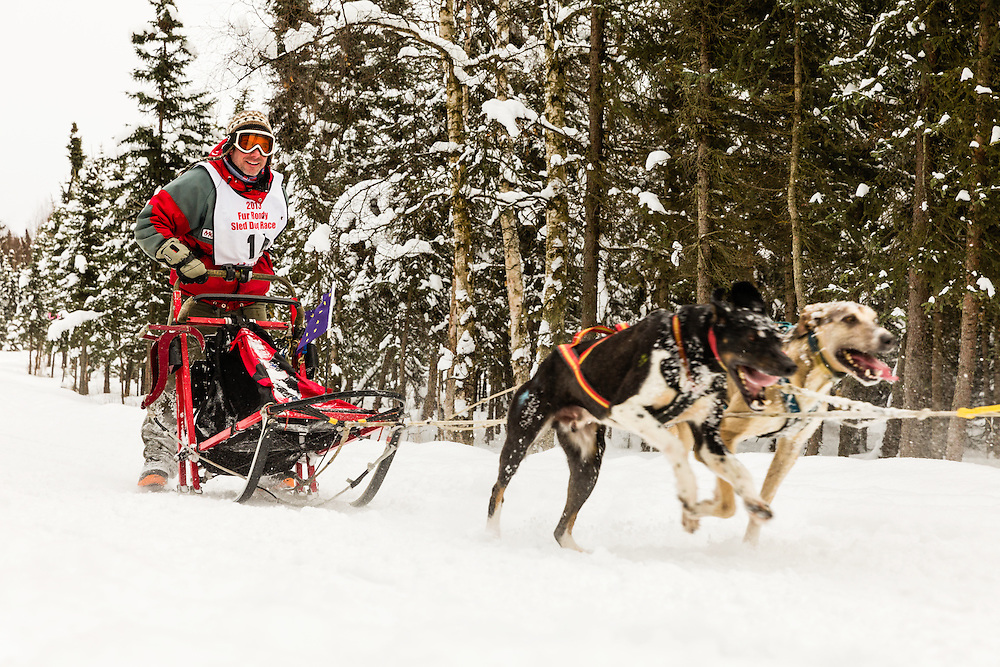 Musher Greg Selletin competing in the Fur Rendezvous World Sled Dog Championships at Goose Lake Park in Anchorage in Southcentral Alaska. Winter. Afternoon.