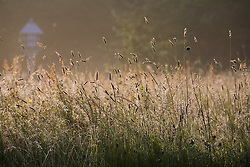Grasses in the Orchard meadow at Sissinghurst Castle Garden at dawn