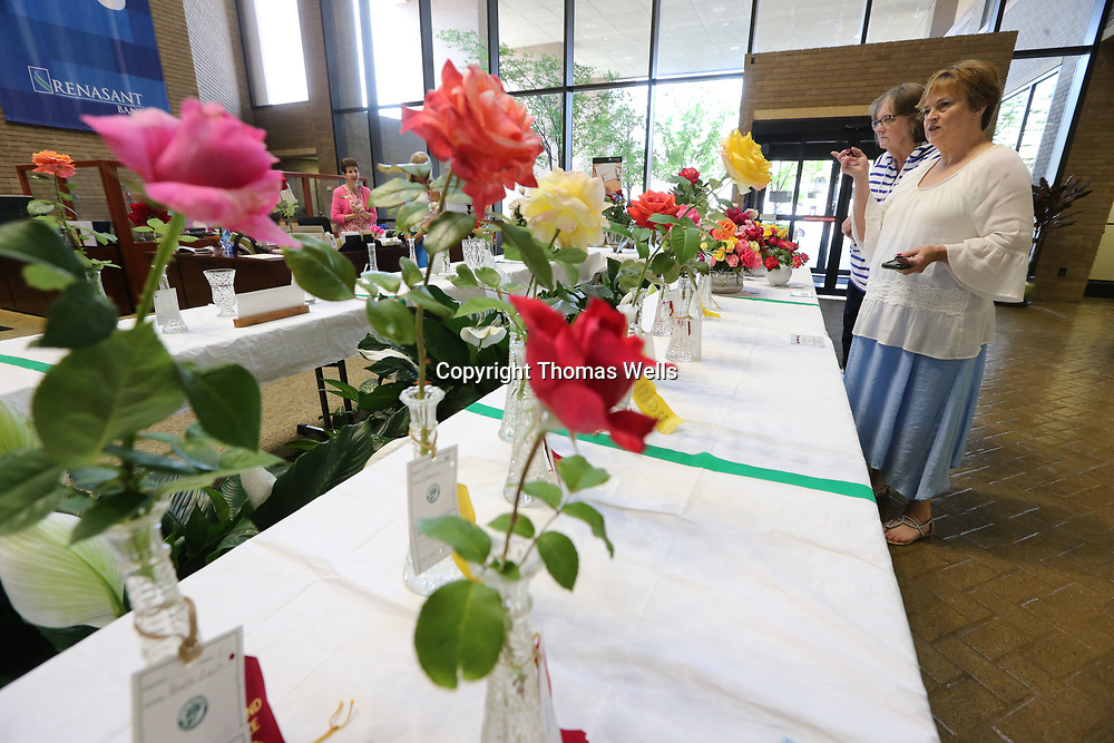 Martha Stancil, left, and Kathy Franks admire the roses on display at the annual Northeast Mississippi Rose Society Rose Show held at the Renasant Bank in downtown Tupelo on Thursday.