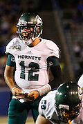 Sacramento State Hornets quarterback GARRETT SAFRON (12) calls out plays during the season opener agains the San Jose State Spartans at San Jose State University's Spartan Stadium in San Jose, California, on August 29, 2013. The San Jose State Spartans beat the Sacramento State Hornets 24-0. (Stan Olszewski/ZUMA Press)