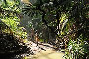 Chasse dans la jungle. Les Jarawas chassent à l'arc les cochons sauvages, les daims, mais aussi les tortues marines, les lézards, les poissons et les écrevisses. Mais à cause du braconnage, leur gibier disparait rapidement. Il n'y a déjà presque plus de cochons sauvages, qui est l'élément principal de leur alimentation.