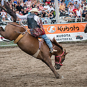 This rider holds on tight as the bronco tries to eject him, at Valleyfield Rodeo 2012.