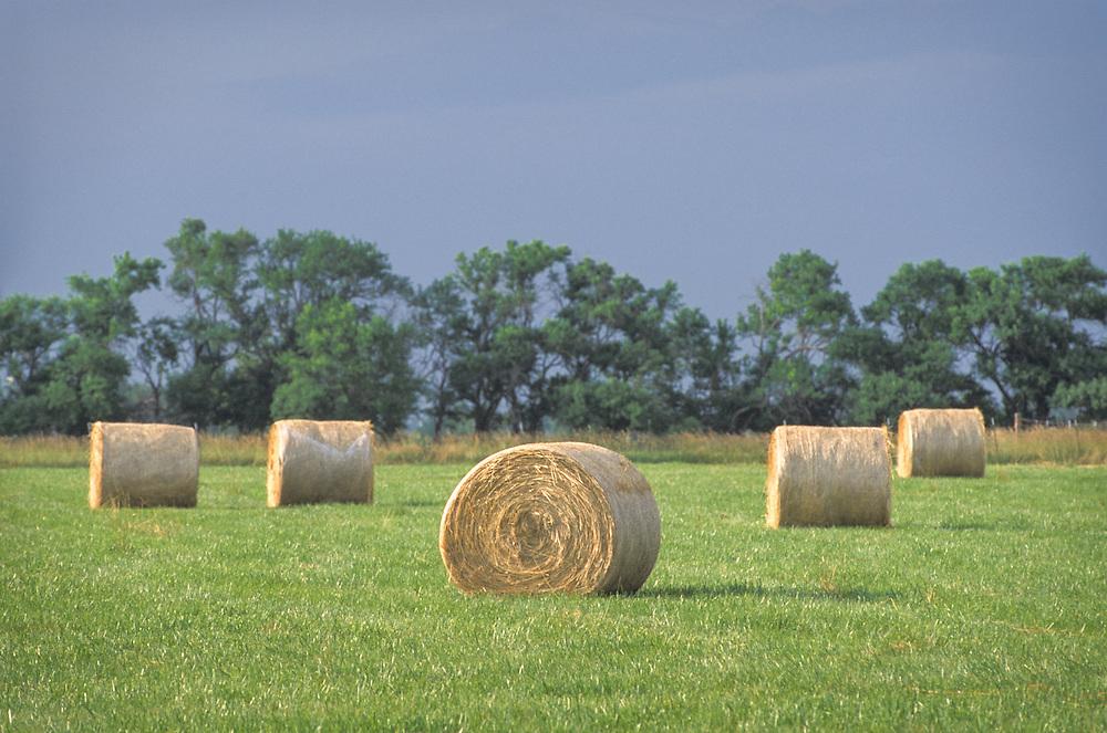 Kansas, USA - Round Bale Hay