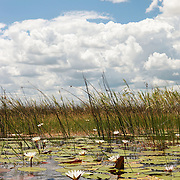 Okavango Delta scenic.
