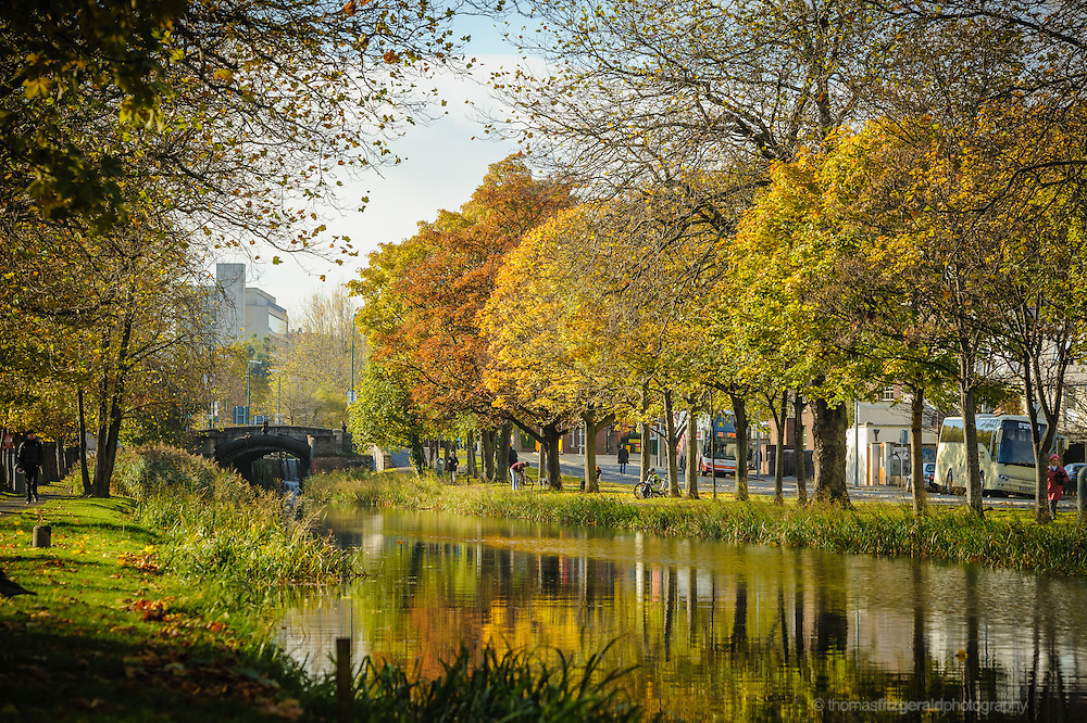 Beautiful Autumn colours on the trees by the edge of Dublin's Grand Canal