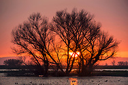 Sunset behind cottonwood trees in the Merced National Wildlife Refuge, Merced County, California