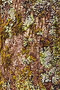 Forest, Mount Aspiring National Park, New Zealand
