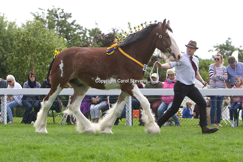 Mrs J E L Pleavin Edge's Bay Gelding<br /> Manor Perfection<br /> Sire  Metheringham Upton Hamlet<br /> 1st   Filly or Gelding, 2yr old Class