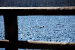 Monticchio Laghi (PZ) 12.03.2011 - Il degrado dei laghi di Monticchio (PZ). Il lago grande con la fauna.