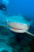Lemon Shark and Diver, Movement